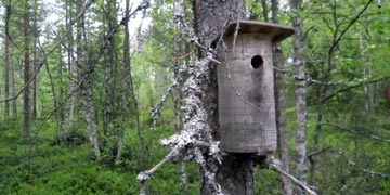 Bird nesting box. photo: Timo Tahvonen