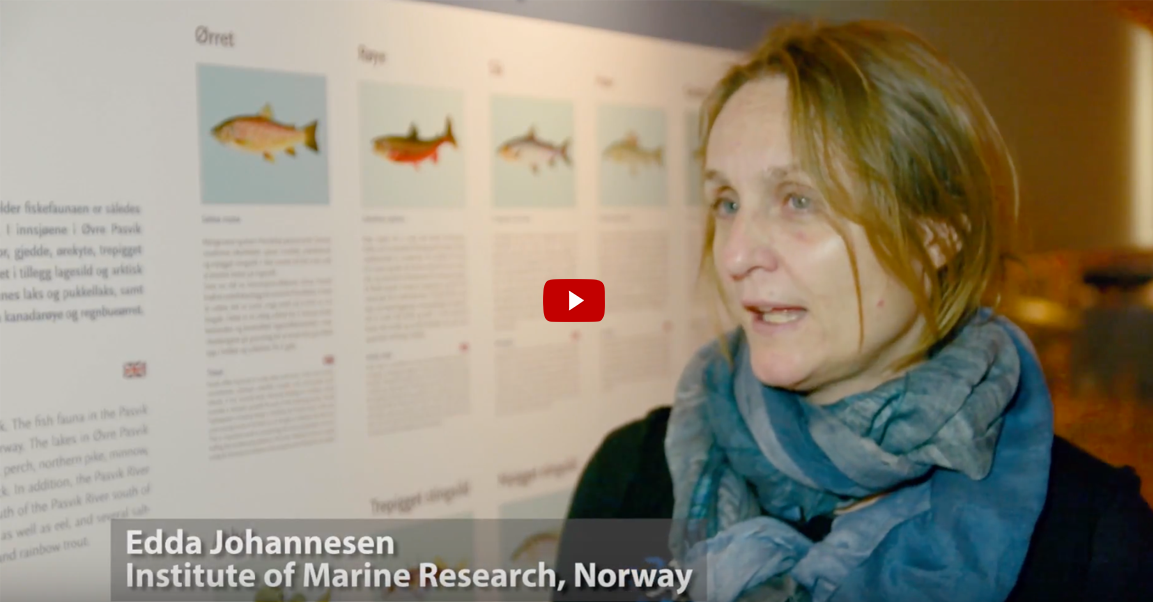 Edda Johannesen southern species in the Barents Sea