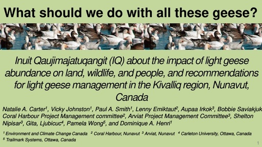 What should we do with all these Snow Geese? ...Bringing Inuit local knowledge into management of an international wildlife resource: Victoria Johnston